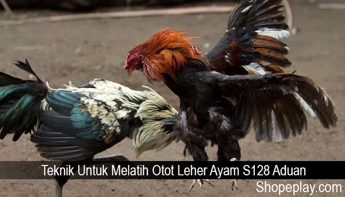 Teknik Untuk Melatih Otot Leher Ayam S128 Aduan